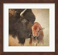 Framed Bison Mother And Calf