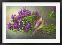 Framed Lilac Branch Kestrel