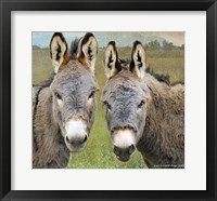 Framed Cute Donkeys