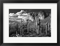 Framed Superstition Mtn Saguaros Arizona