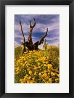 Framed Desert Flowers With Tree Arizona