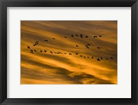 Framed Early Morning Bosque Del Apache New Mexico