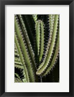 Framed Saguaro Cactus Arms