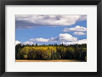Framed Escudilla Mountain Meadow Fall 2