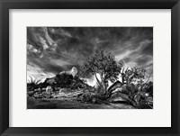 Framed Sedona Juniper Tree 2