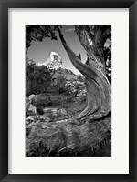Framed Sedona Juniper Tree National Forest