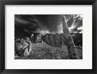 Framed Saguaros Lost Dutchman State Park Arizona Superstition Mtns 1