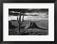 Framed Saguaros Lost Dutchman State Park Arizona Superstition Mtns 2