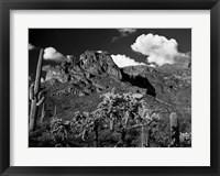 Framed Saguaros Lost Dutchman State Park Arizona Superstition Mtns