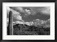 Framed Arizona Superstition Mtns Saguaros 1