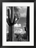 Framed Arizona Superstition Mtns Saguaros 2