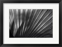 Framed Arizona Fern