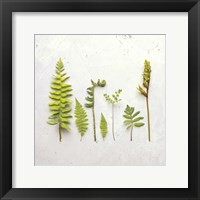 Framed Flat Lay Ferns III