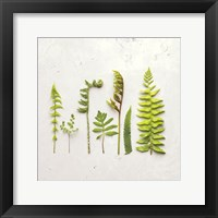 Framed Flat Lay Ferns IV