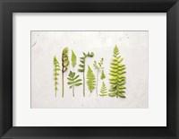 Framed Flat Lay Ferns I