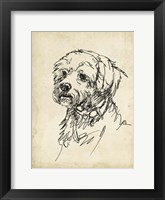 Breed Studies III Framed Print