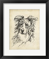 Framed Breed Studies V