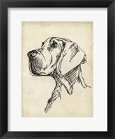 Breed Studies VI Framed Print