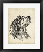 Framed Breed Studies VII