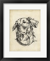 Breed Studies VIII Framed Print