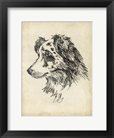 Breed Studies XI Framed Print