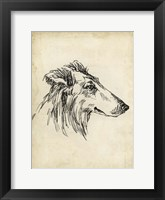 Breed Studies XII Framed Print