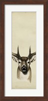 Framed Triptych Whitetail II