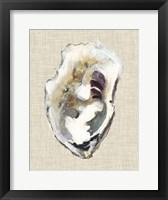 Framed Oyster Shell Study I