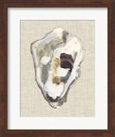 Framed Oyster Shell Study II