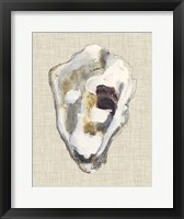 Framed Oyster Shell Study II