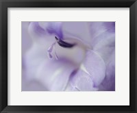 Framed Gift in Purple I