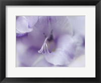 Framed Gift in Purple II