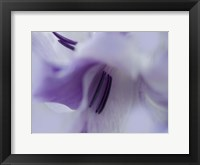 Framed Gift in Purple III