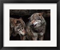 Framed Wolfpack