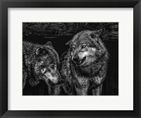Framed Wolfpack Black & White