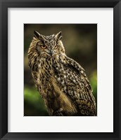 Framed Wise Owl 2