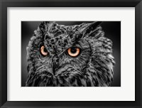 Framed Wise Owl 5 Black & White