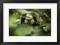 Framed Little Monkey hiding