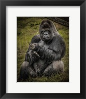 Framed Male Gorilla Black