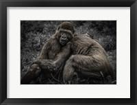 Framed Gorillas 2
