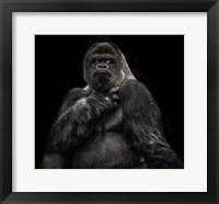 Framed Male Gorilla 2 Black