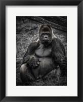 Framed Male Gorilla 3