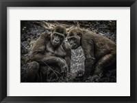 Framed Gorillas 3