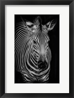 Framed Zebra 3 Black & White