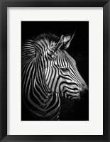 Framed Zebra 4 Black & White