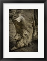 Framed Male Rhino