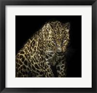 Framed Angry Jaguar