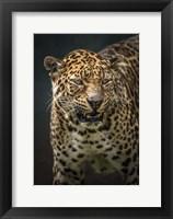 Framed Angry Jaguar 2