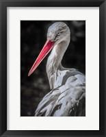 Framed Stork 7