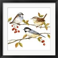 Framed Birds & Berries I